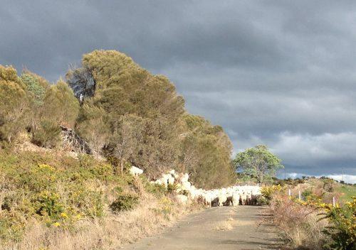 P6: Climbing up into the she-oak grove.