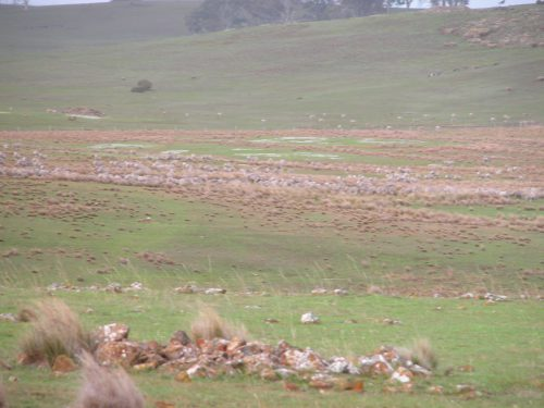 P1: Pickup. The sheep you can see on the far green slope are not mine--my boundary is where the reddish-brown grass stops. My sheep are in the nearer patch of old grass.