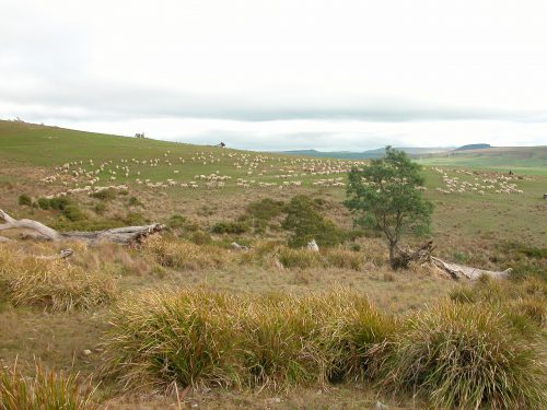 P4: moving across the southernmost hill. The native grassland section is on the right, and over the crest of the hill.