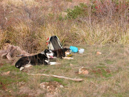 P6: Dogs having a well-deserved rest in the sun. I'd just finished the second half of my lunch.