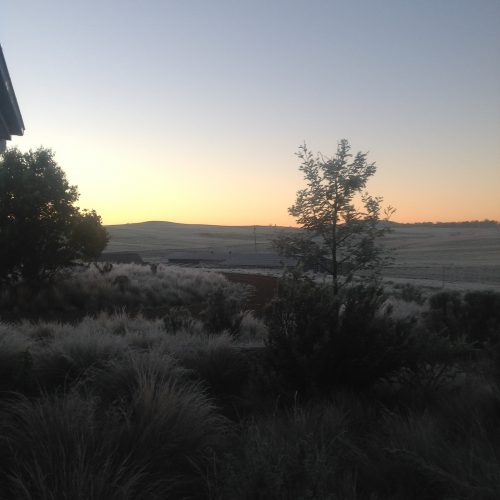 P2: White frost this morning--the view from my back door just before sunrise.