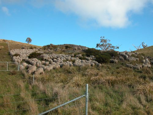 P9: The first rocky bit to get up the south side of Waterfall Gully