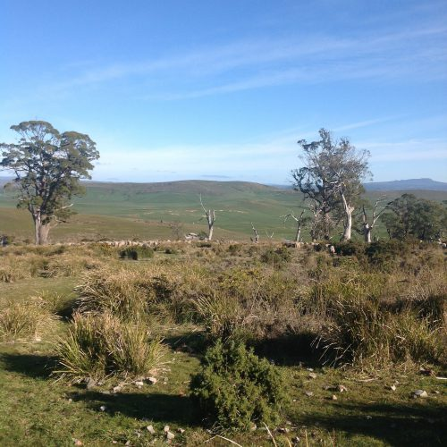 P1: Still in the Back Gully Reserve, which is great. We'll mosey down the eastern side of the gully if we can. Beautiful day– no wind and sunny. Should be a pleasure to be out!