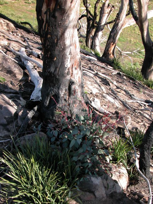 P2: Regrowth in the burned reserve.