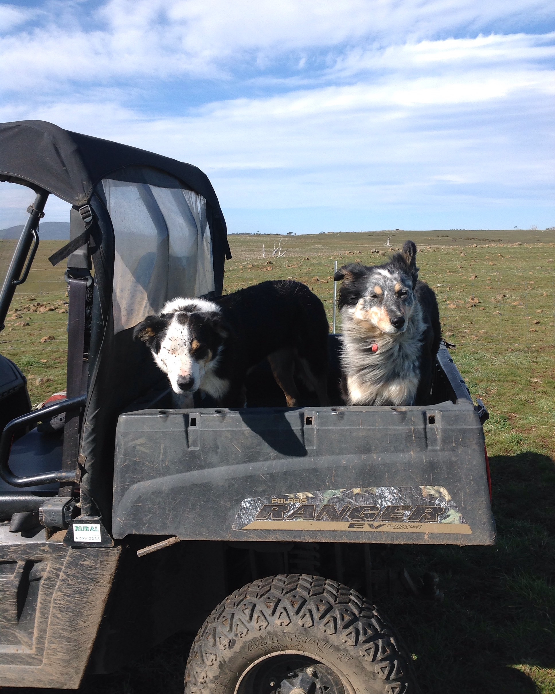 The next generation: Joker and Pearl. We were out looking for a leak in the water system. Joker runs a bit too close to the back wheel--hence the mud freckles!