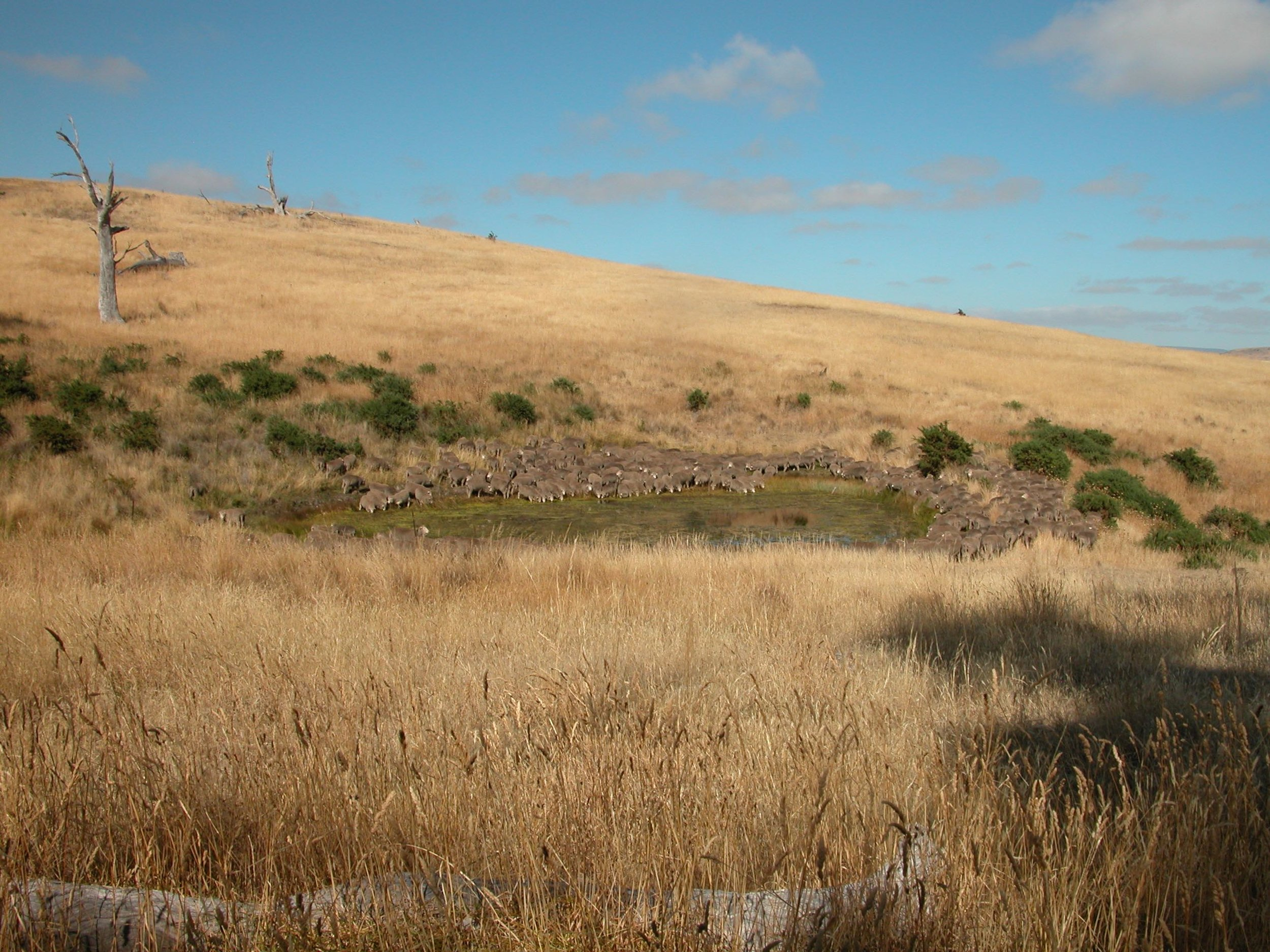 The waterhole in the Back Gully Reserve.