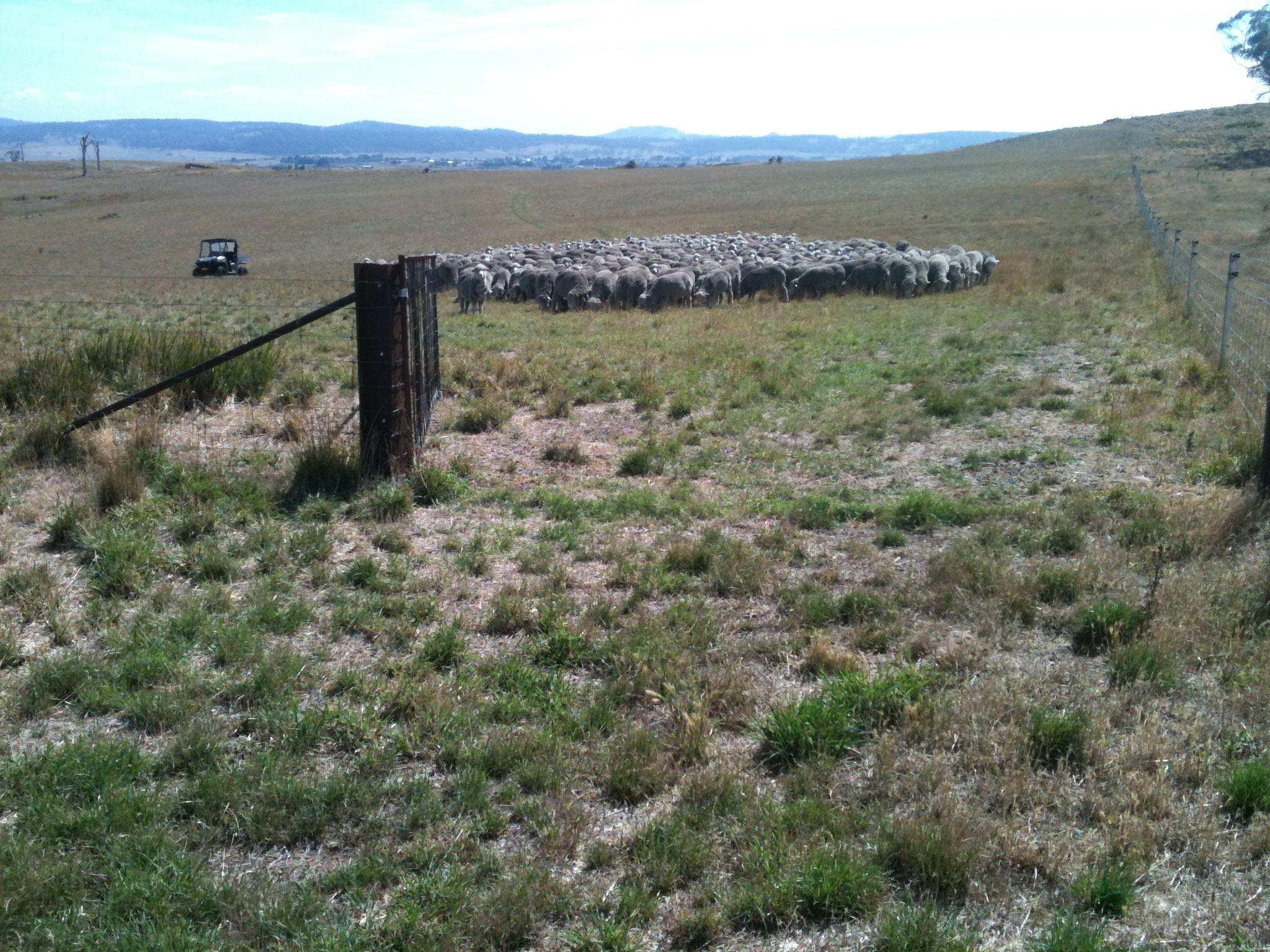 The same gate as in the top photo, from the Grass Gully into the Back Gully in January 2015. Previous 12 months' rainfall was 356 mm or 14 inches. Grazing pressure was 1000 or 1.1 to the acre.