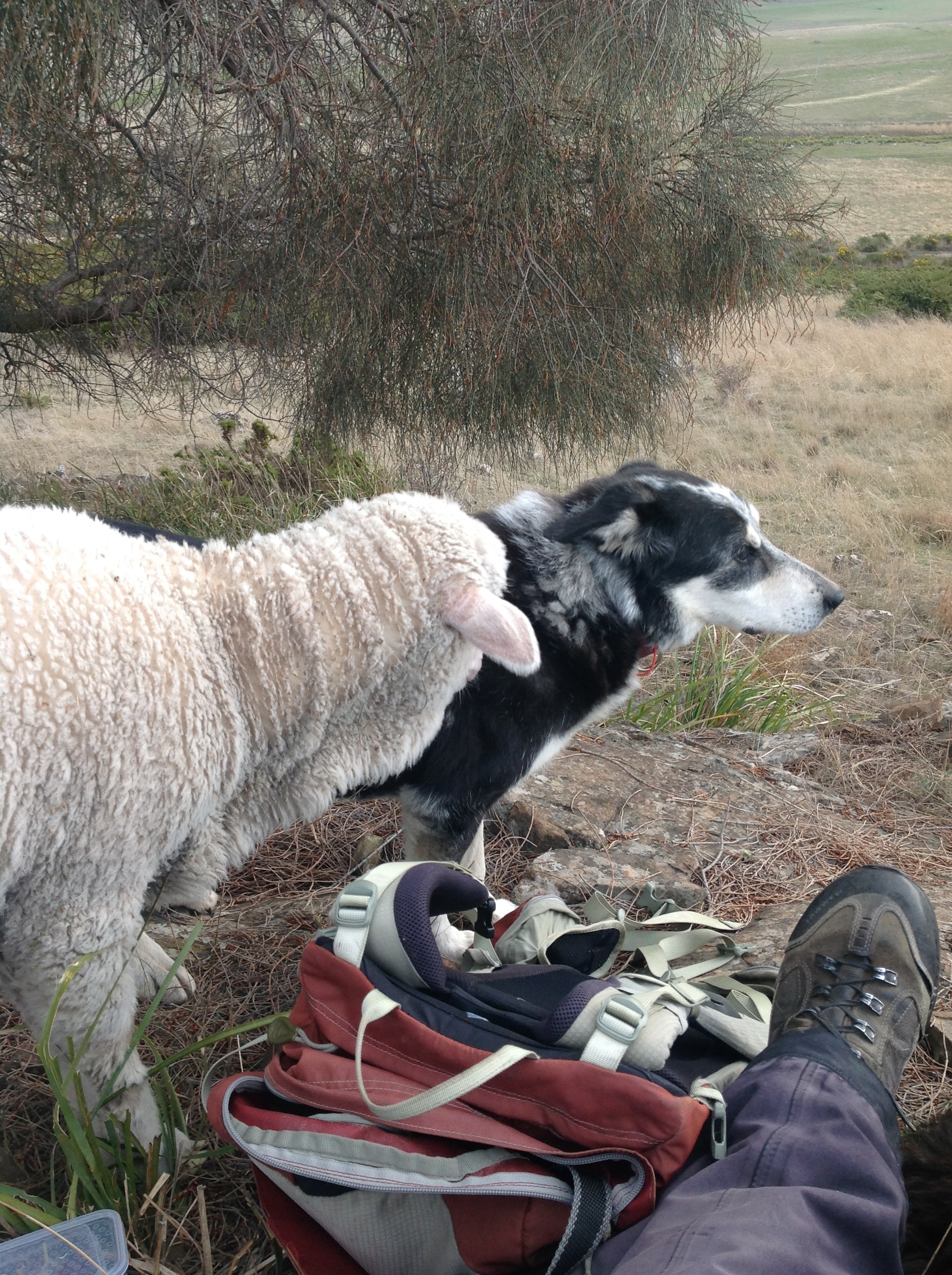 Chance ignoring Zac's overtures of friendship, during a break on a chilly shepherding day