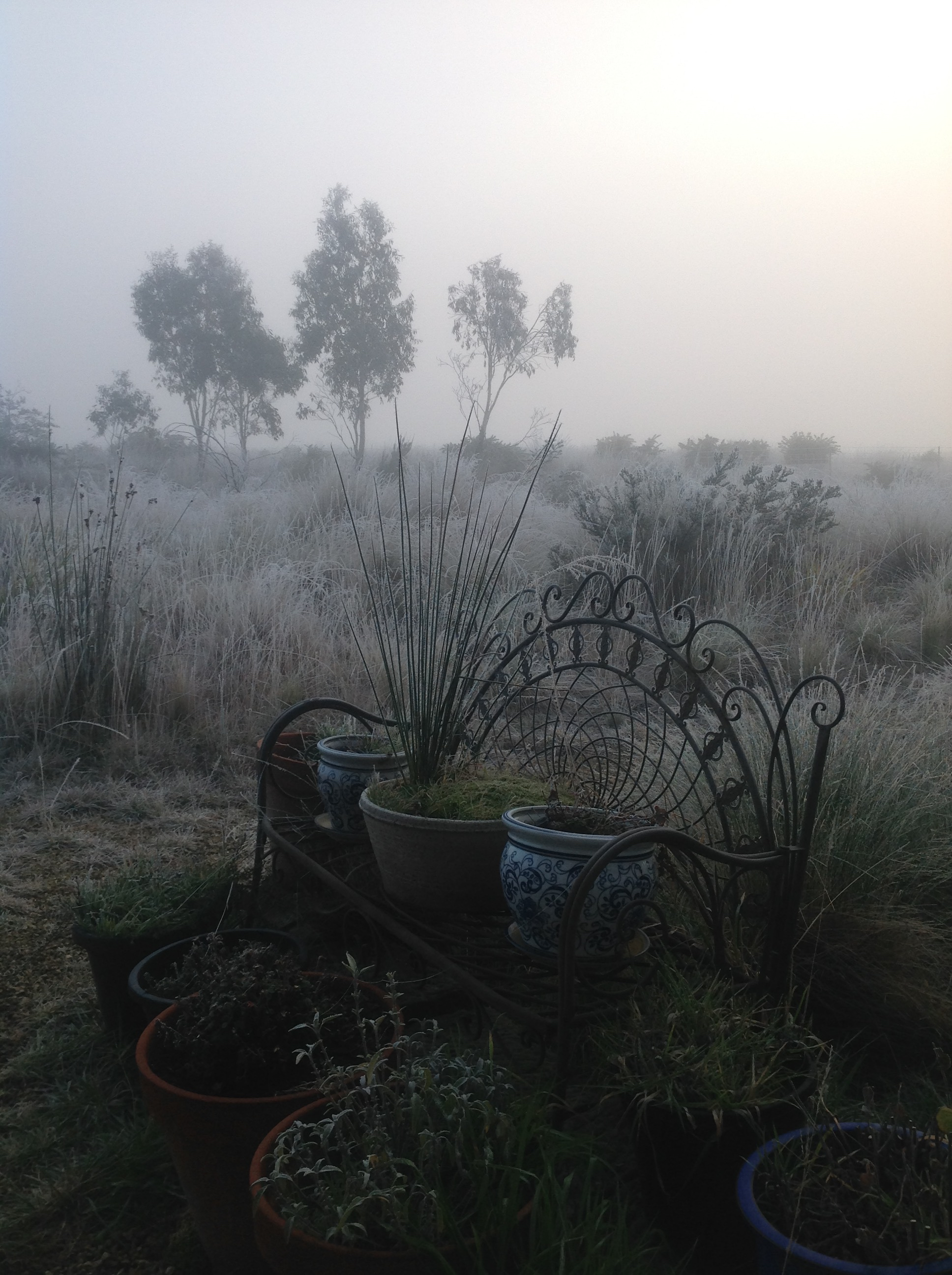 Outside my front door on a foggy, frosty -7 degree morning last week.
