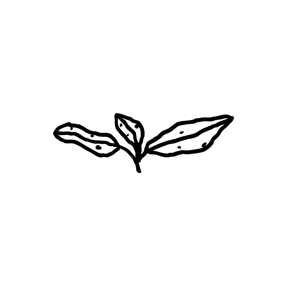 Aotea-Icons_Horopito.jpg