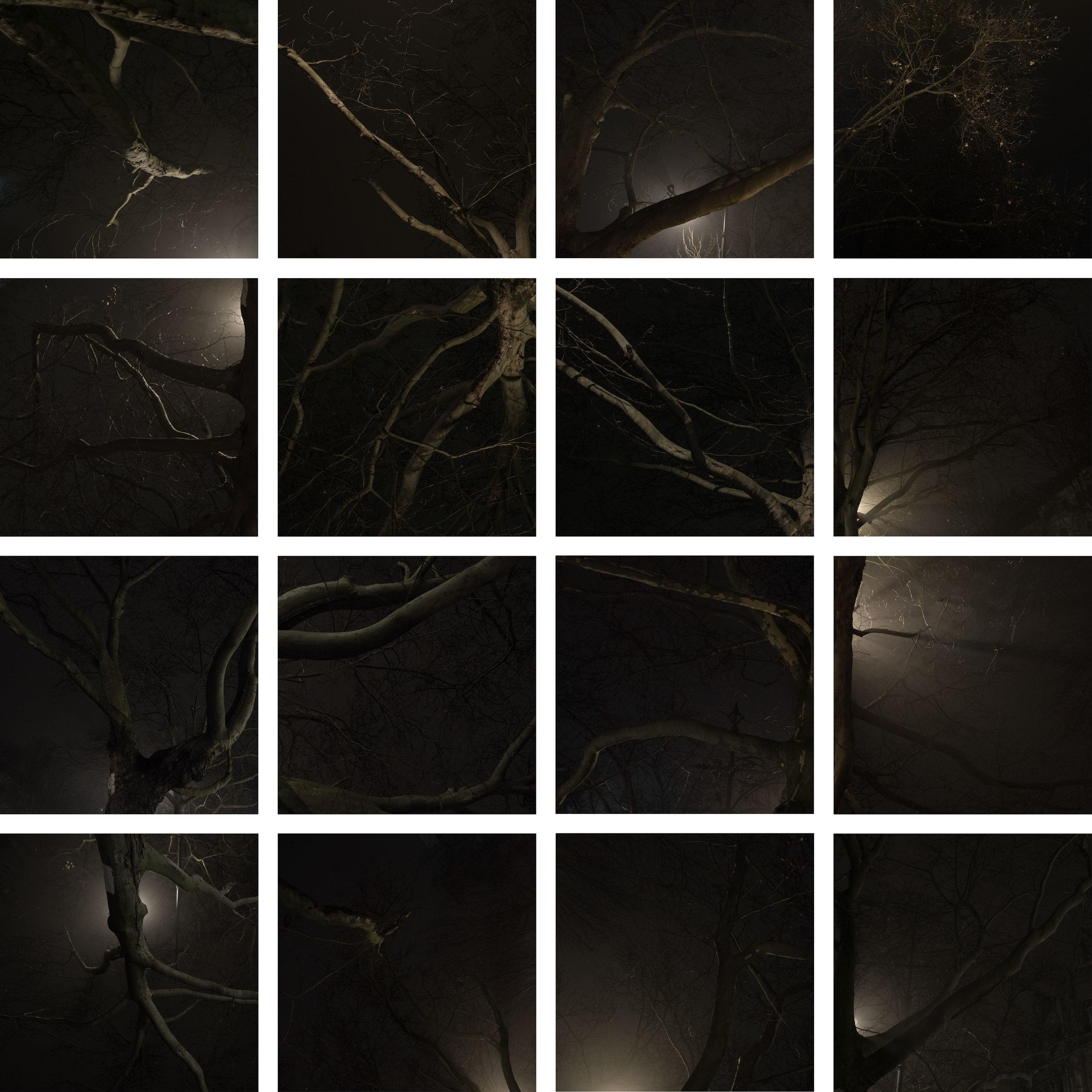 Limbs_2_k.jpg