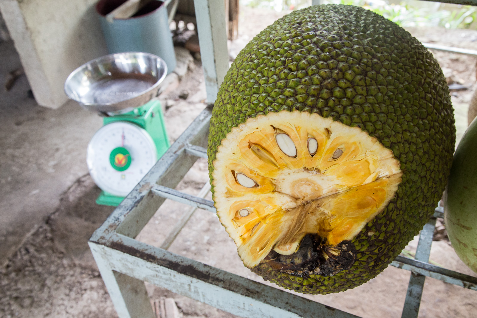 A jackfruit in cross-section. Although cheaper to buy like this there are plenty of street-vendors selling pre-shucked fruit minus the weird textured sinews and pips at a slightly higher price - a tropical snack ready-to-go.