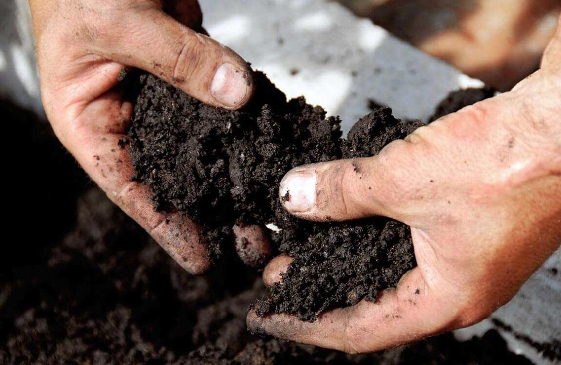 Soil Nutrition