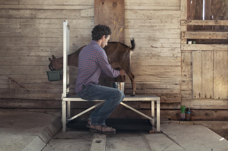 Chad milks a goat.