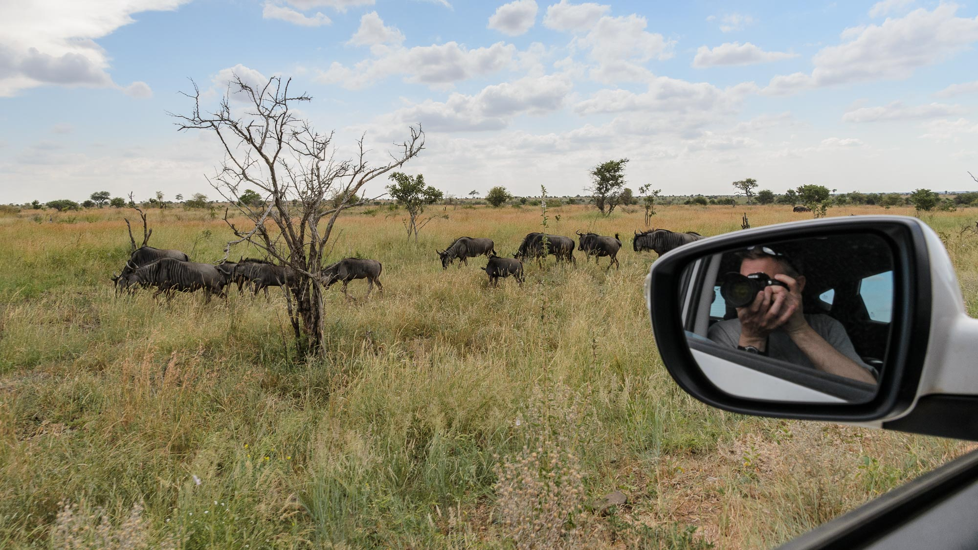 This is me putting in a cameo role with the wildebeest herd.