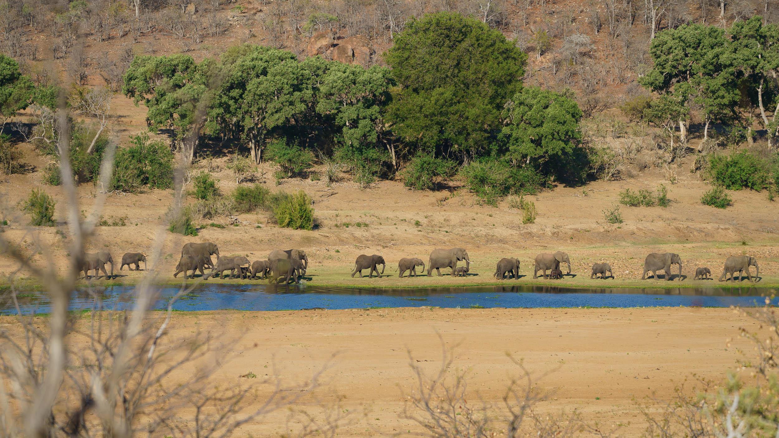 Elephant family along the Letaba river