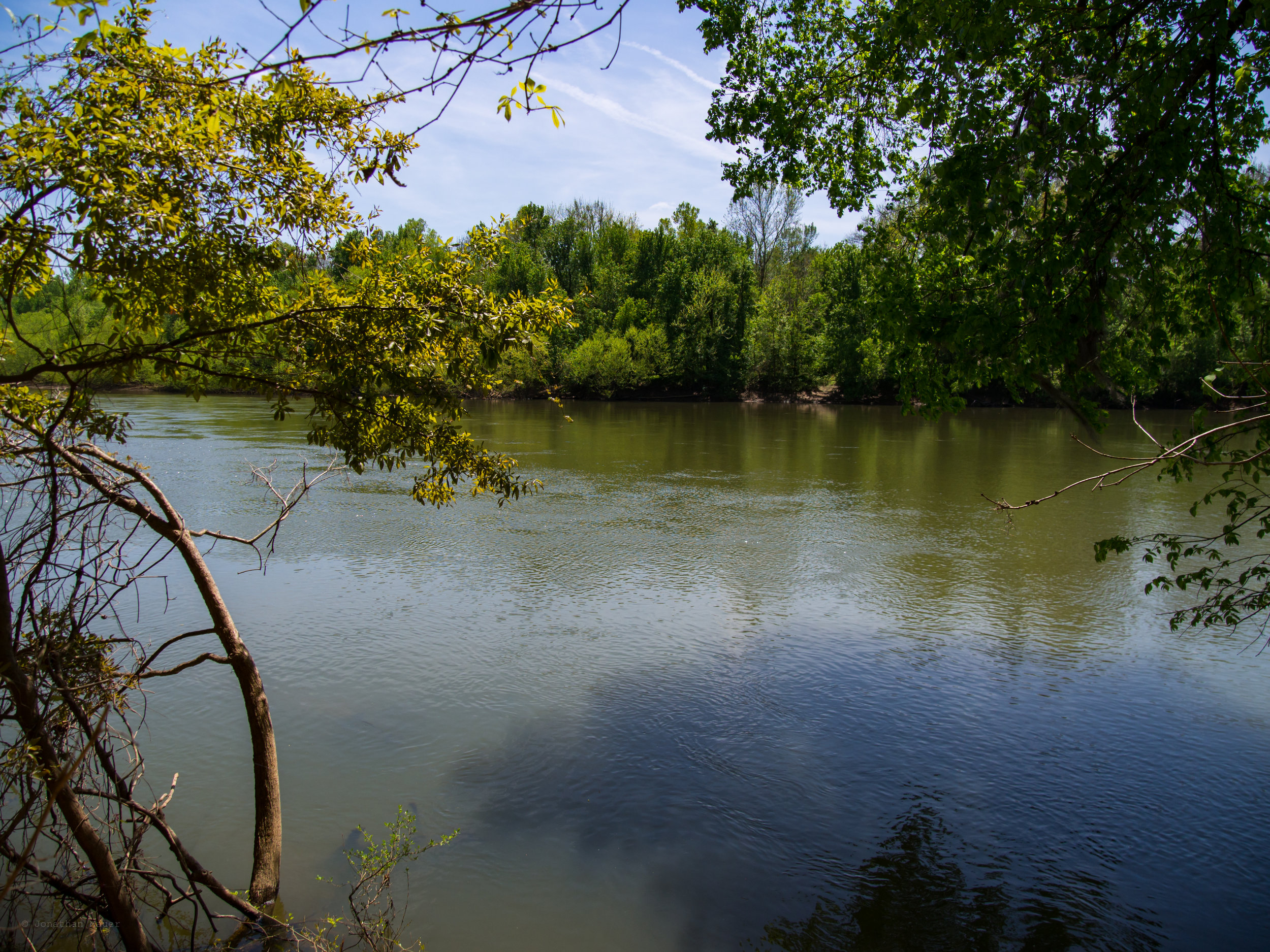 The Congaree River along the River Trail
