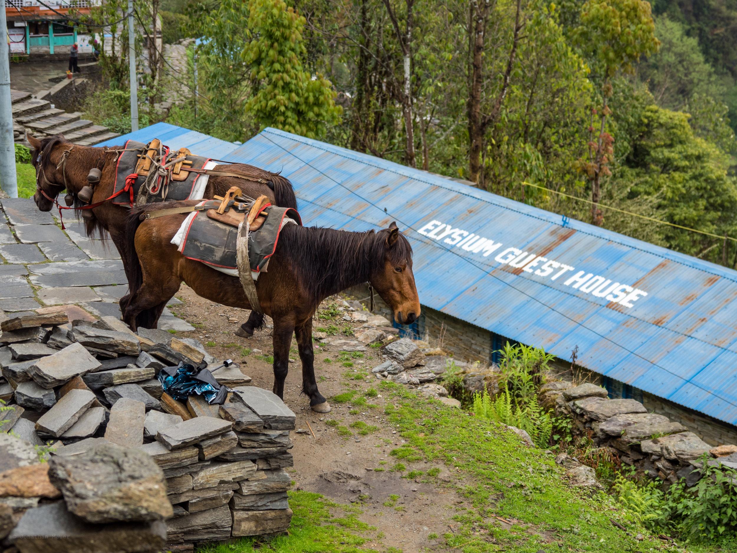 Nepal-16.jpg
