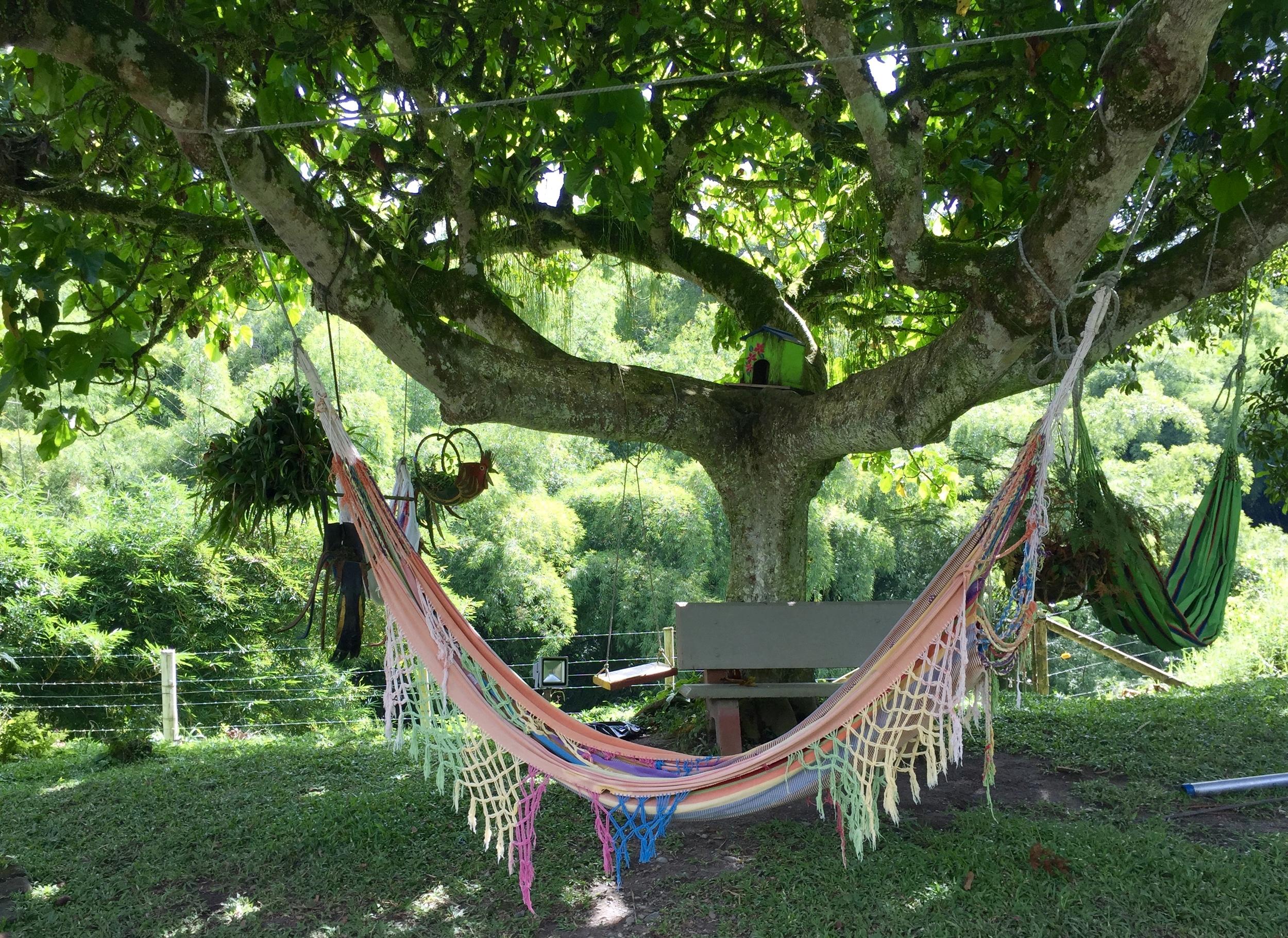 Hammocks adore a beautiful mature tree alongside the hill down which lies a beautiful mountain stream.