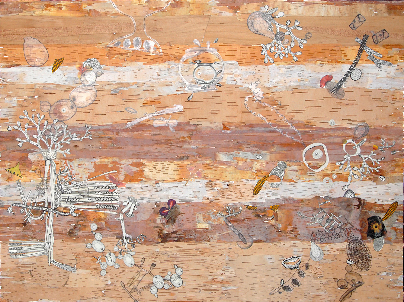 betula , 2011 Birch bark from the Adirondacks, archival inkjet prints, ink, gouache, acrylic, pencil, 40 x 60 inches