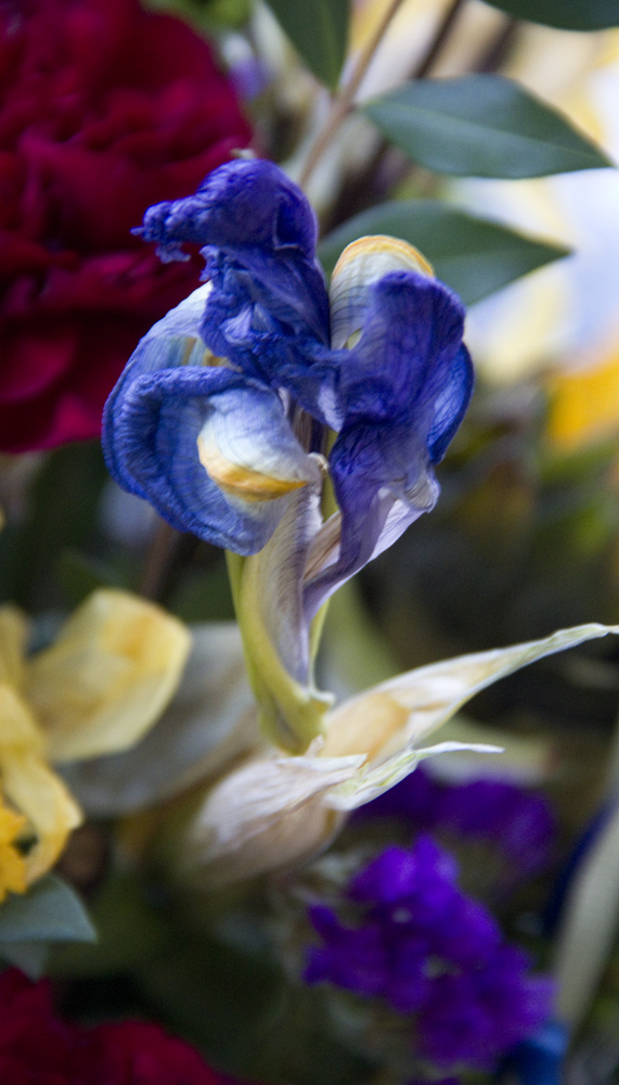 Feel Better, Iris ,2014, Digital photograph, Epson print, 14 x 8 inches