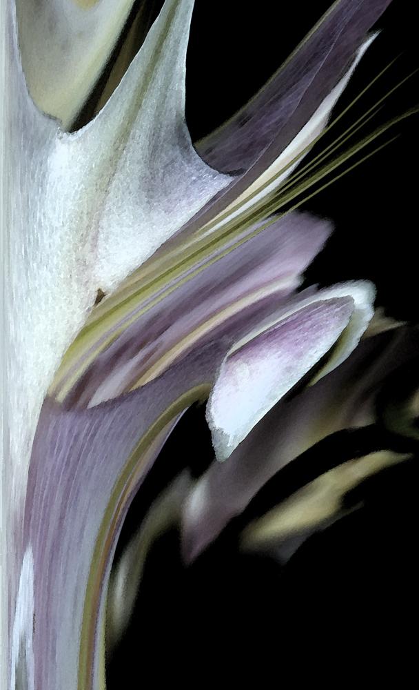 White Flare ,2013, Digital photograph, Epson print, 14 x 8 inches