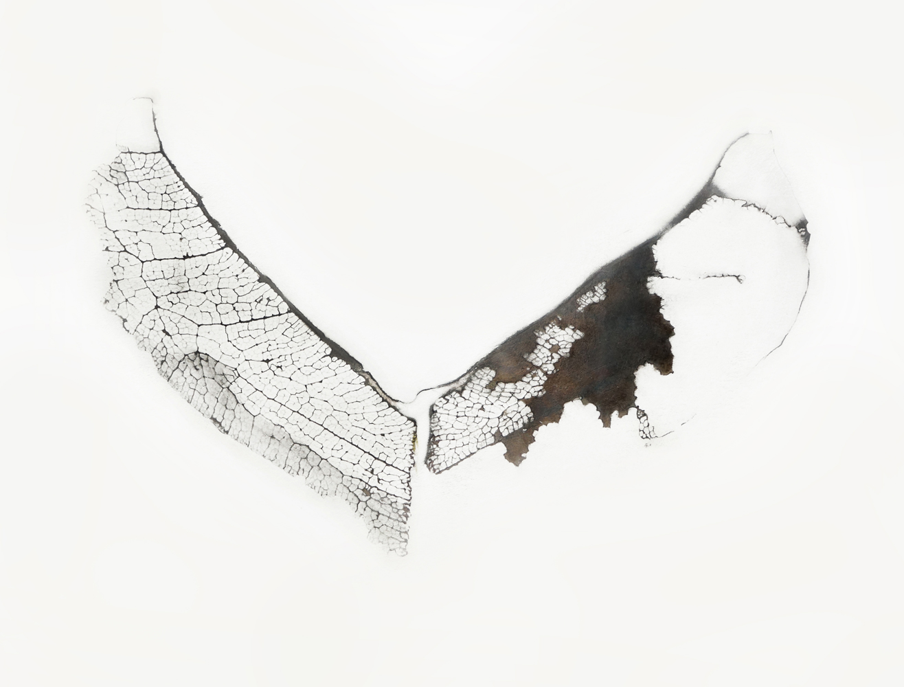 Untitled #10 , 2015, Graphite on prepared paper, 8.5 x 11 inches
