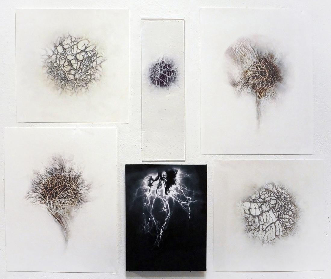 Pterocarpus , 2015, Graphite on prepared paper and digital prints, 20 x 24 inches