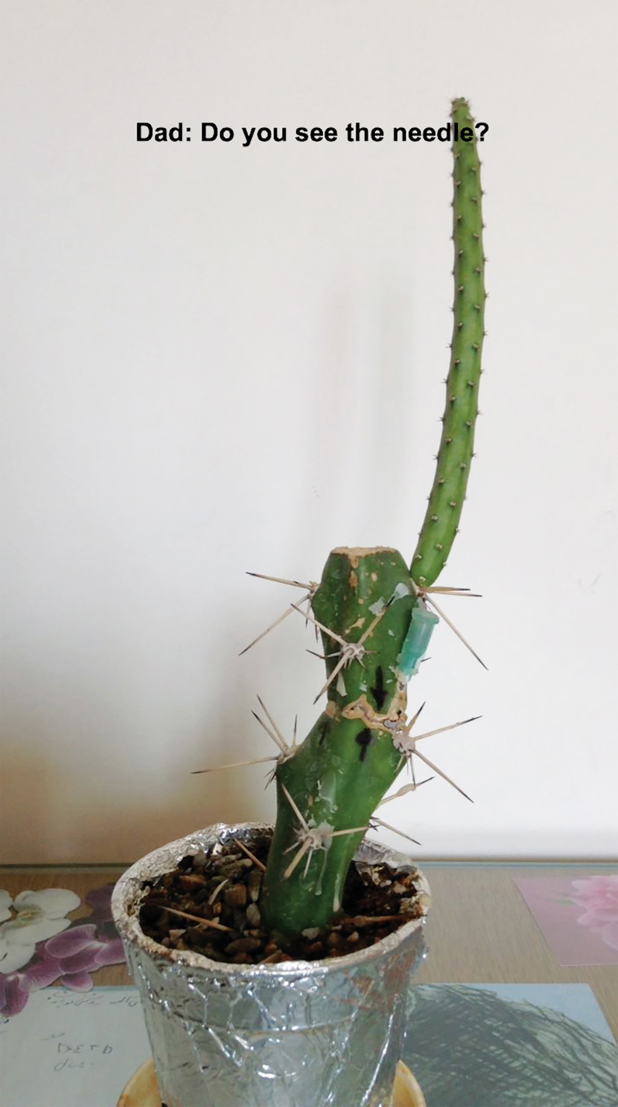 Sareh Imani,  Kindred Stitches (Video Still) , 2018, Right monitor: the sick cactus with sound and English subtitles, on loop, Duration: 00:05:58.