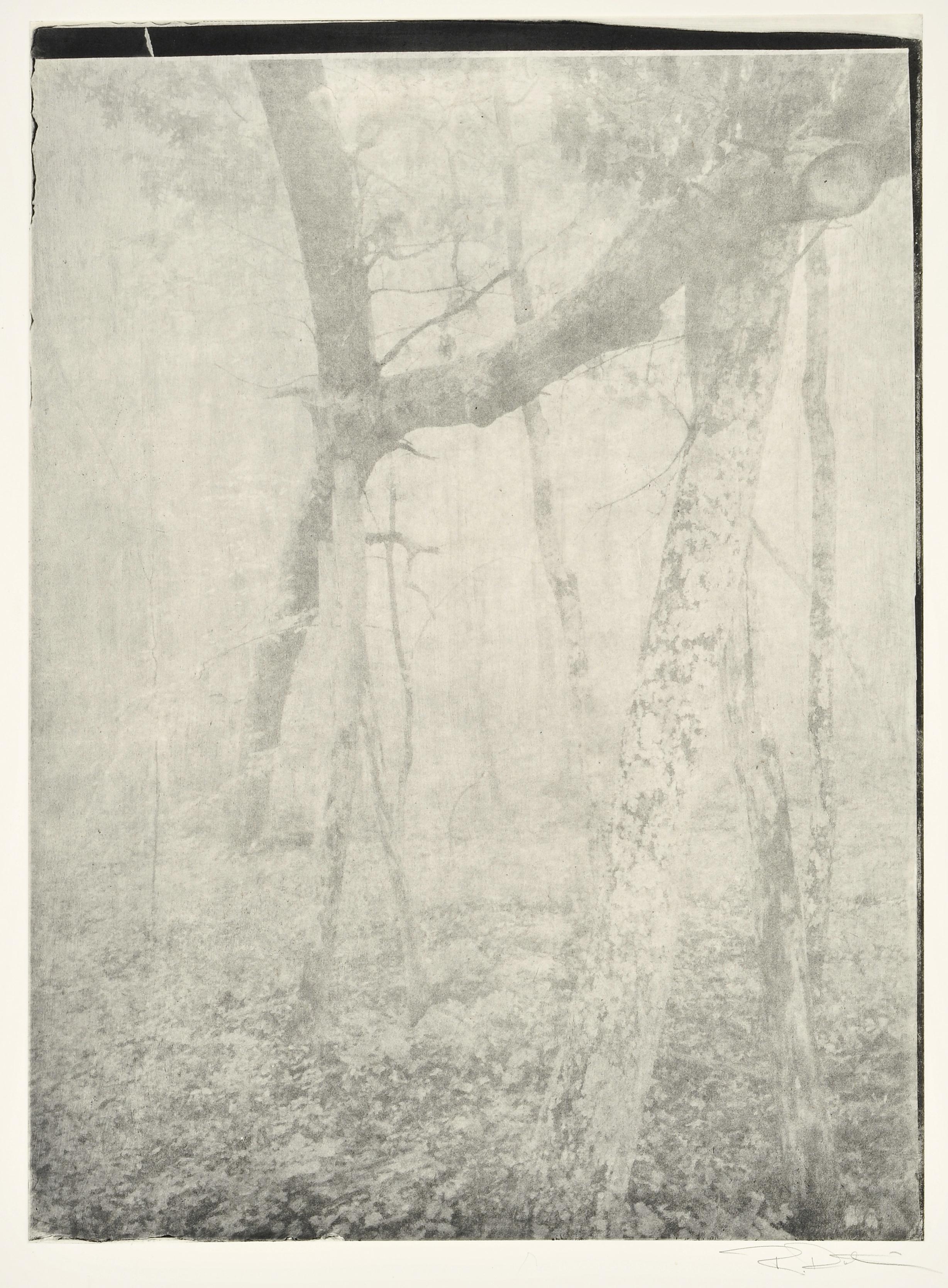 """""""Great Oak Fallen"""""""