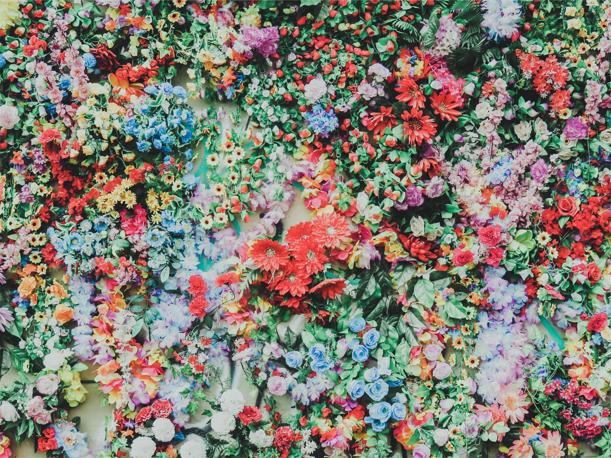 colorful flower wall