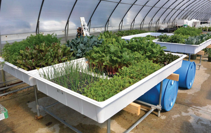 Indoor Agriculture Offers Opportunities To Imagine