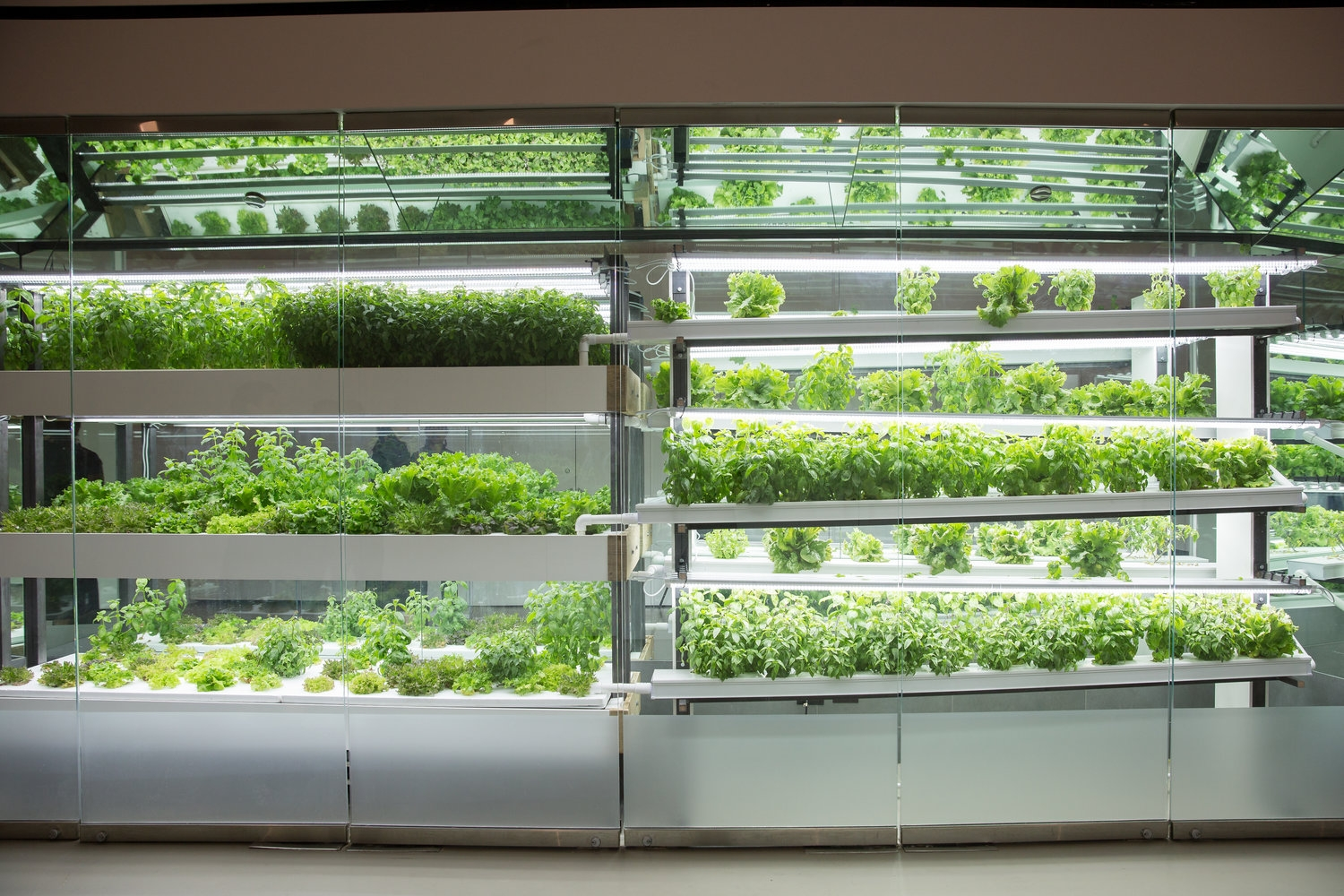 Project Farmhouse's vertical system - designed by HortLED