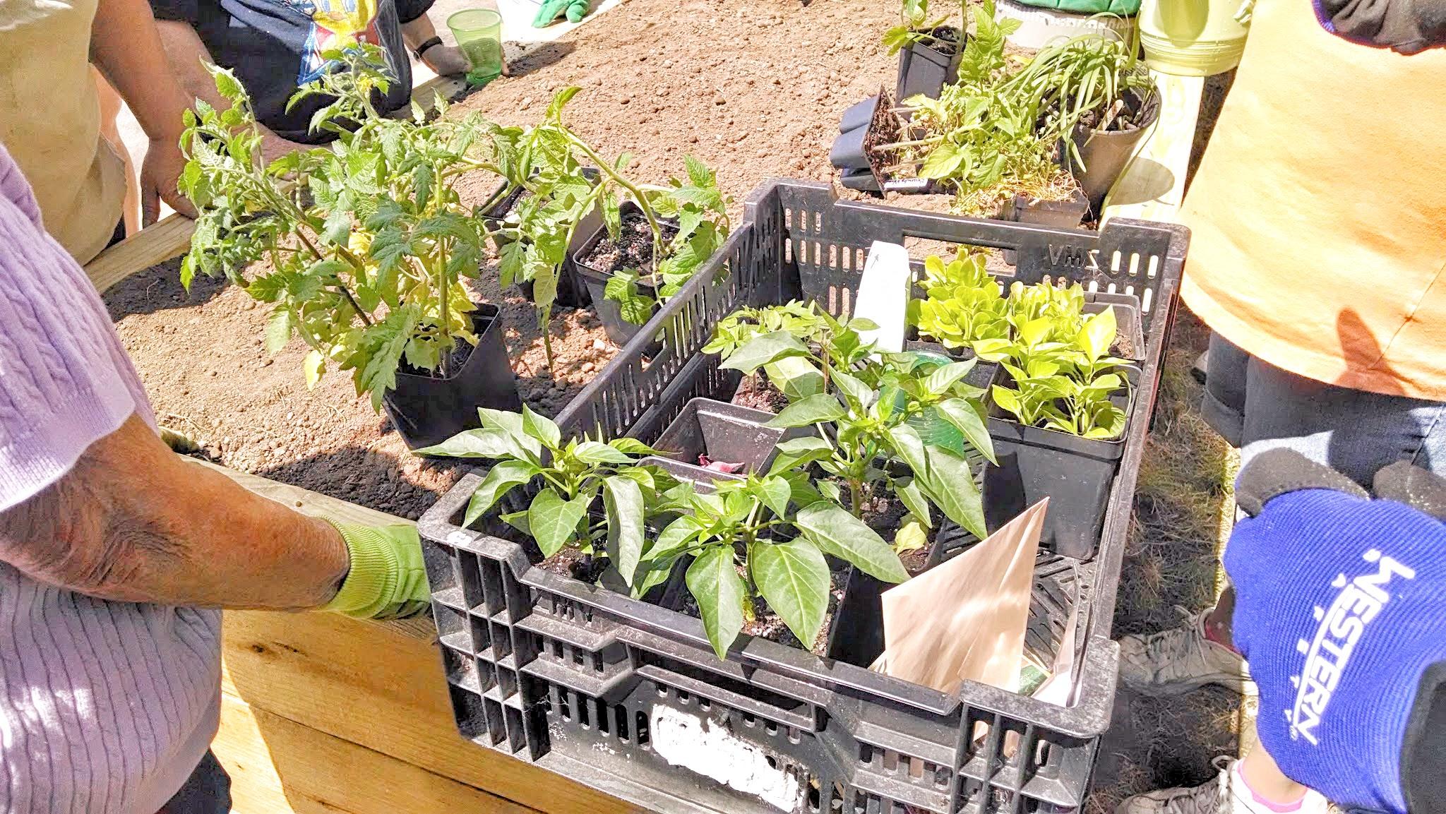 Gardening Through Community