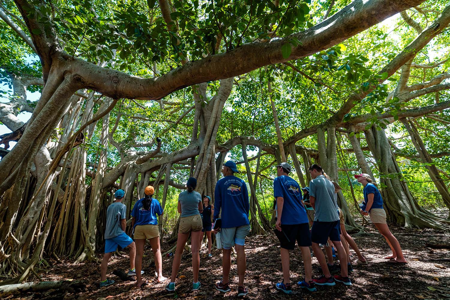 Students exploring the Banyan Tree during their South Eleuthera Road Trip.