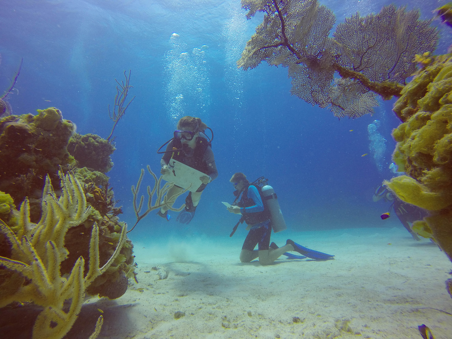 Island School students study small reef patches and take notes and write down observations during a marine ecology lesson.