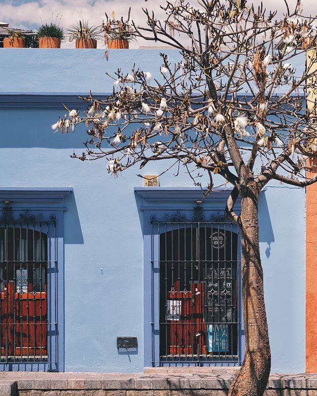 🎶 Natalia Lafourcade | Te Sigo  Oaxaca makes me happy 🌵💙