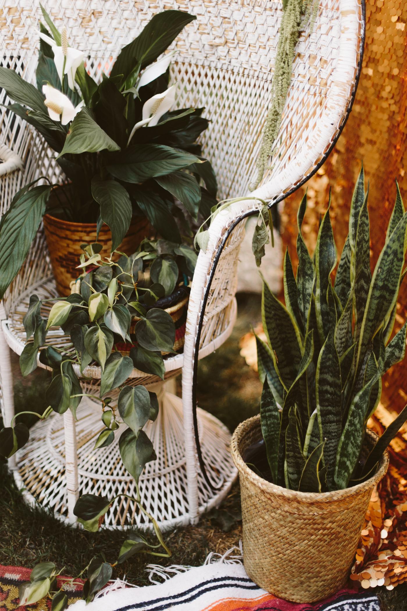 Moroccan Cactus Party-20.jpg