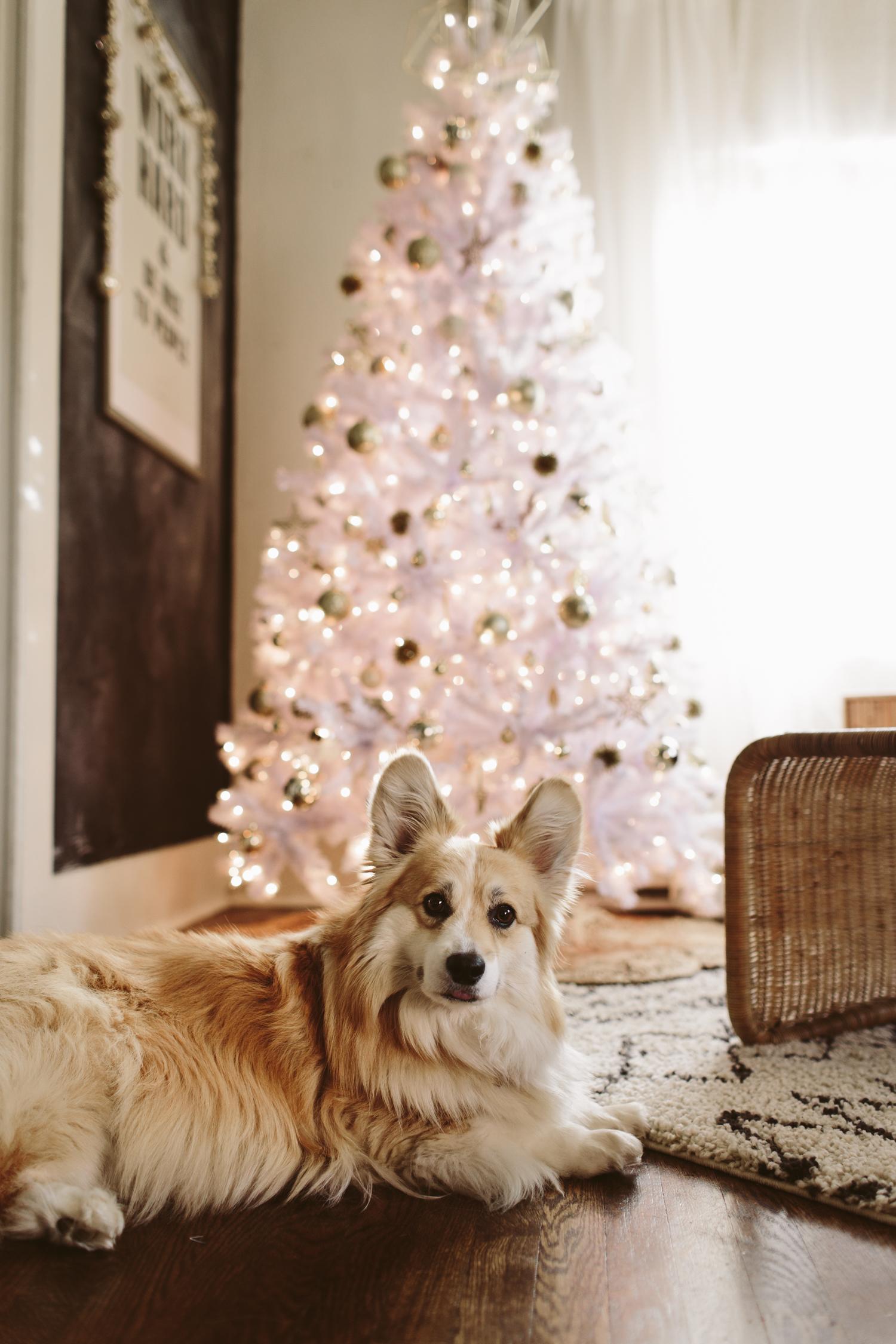 White Christmas Tree Corgi