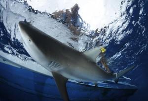 02CEI-Shark-Projects©Thomas-P.-Peschak-SOSF-300x205.jpg