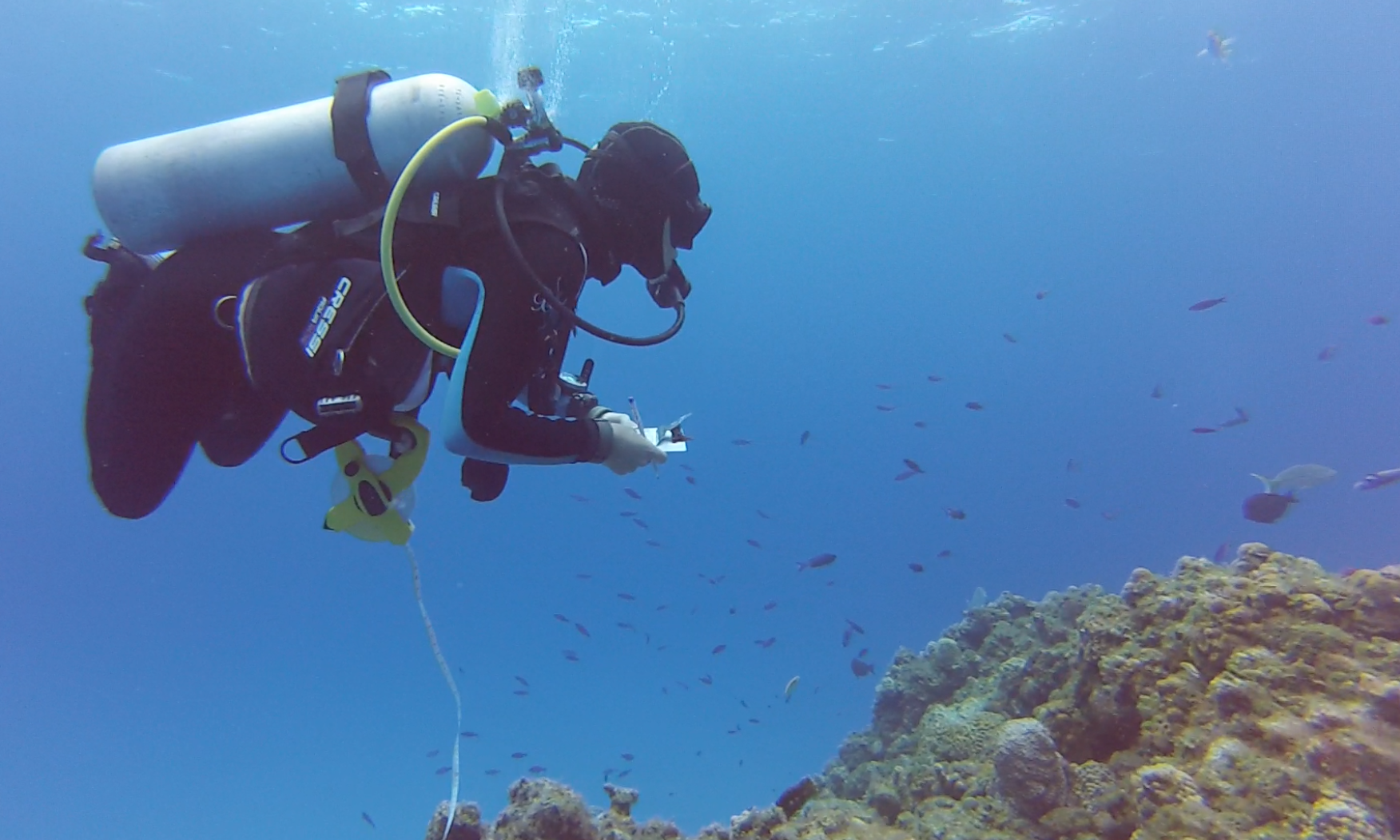 Candice Brittain beginning a 30 meter long fish survey (Photo by Hayley Jo Carr)
