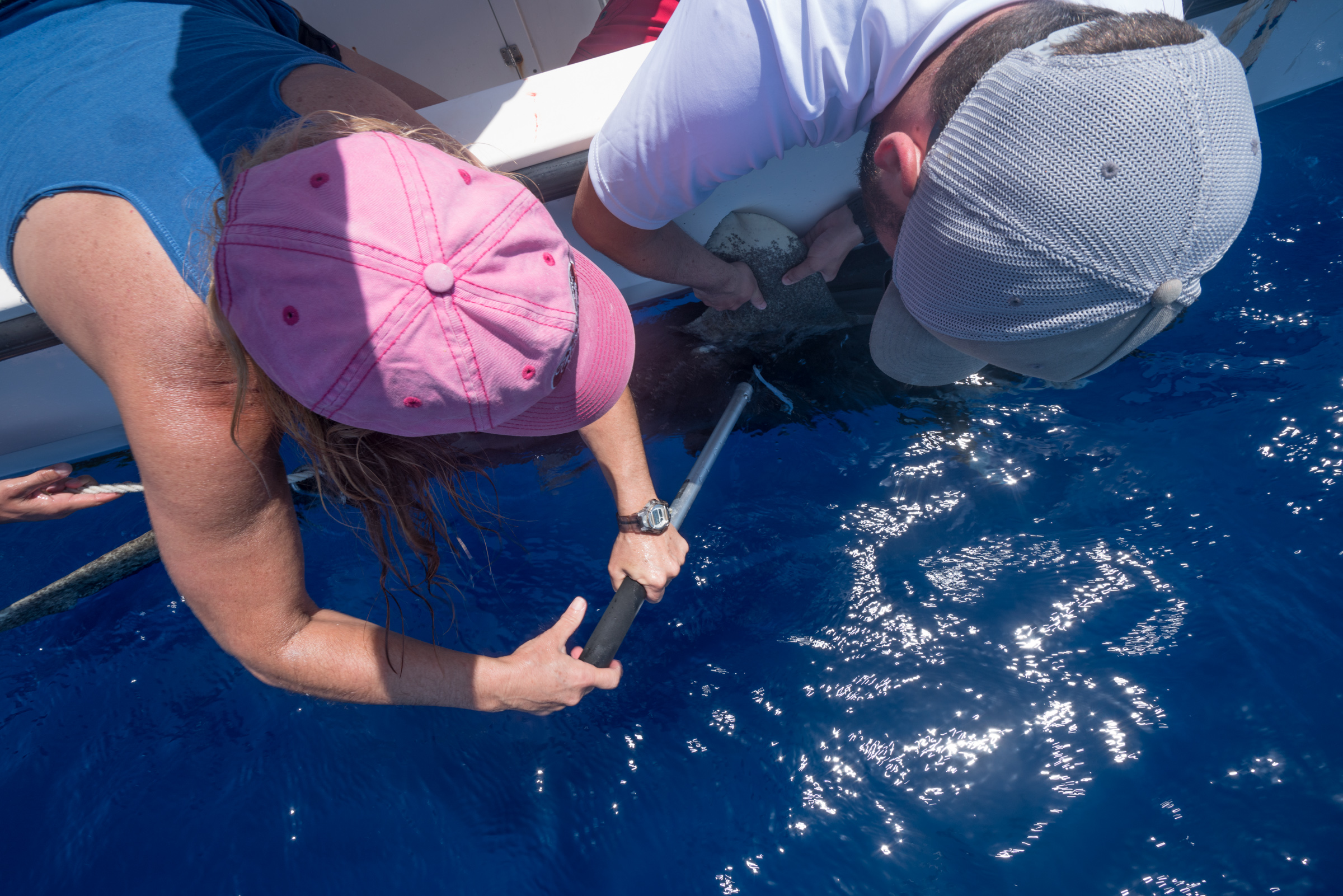 Debbie Abercrombie and Ollie Shipley apply a PSAT to a shark.