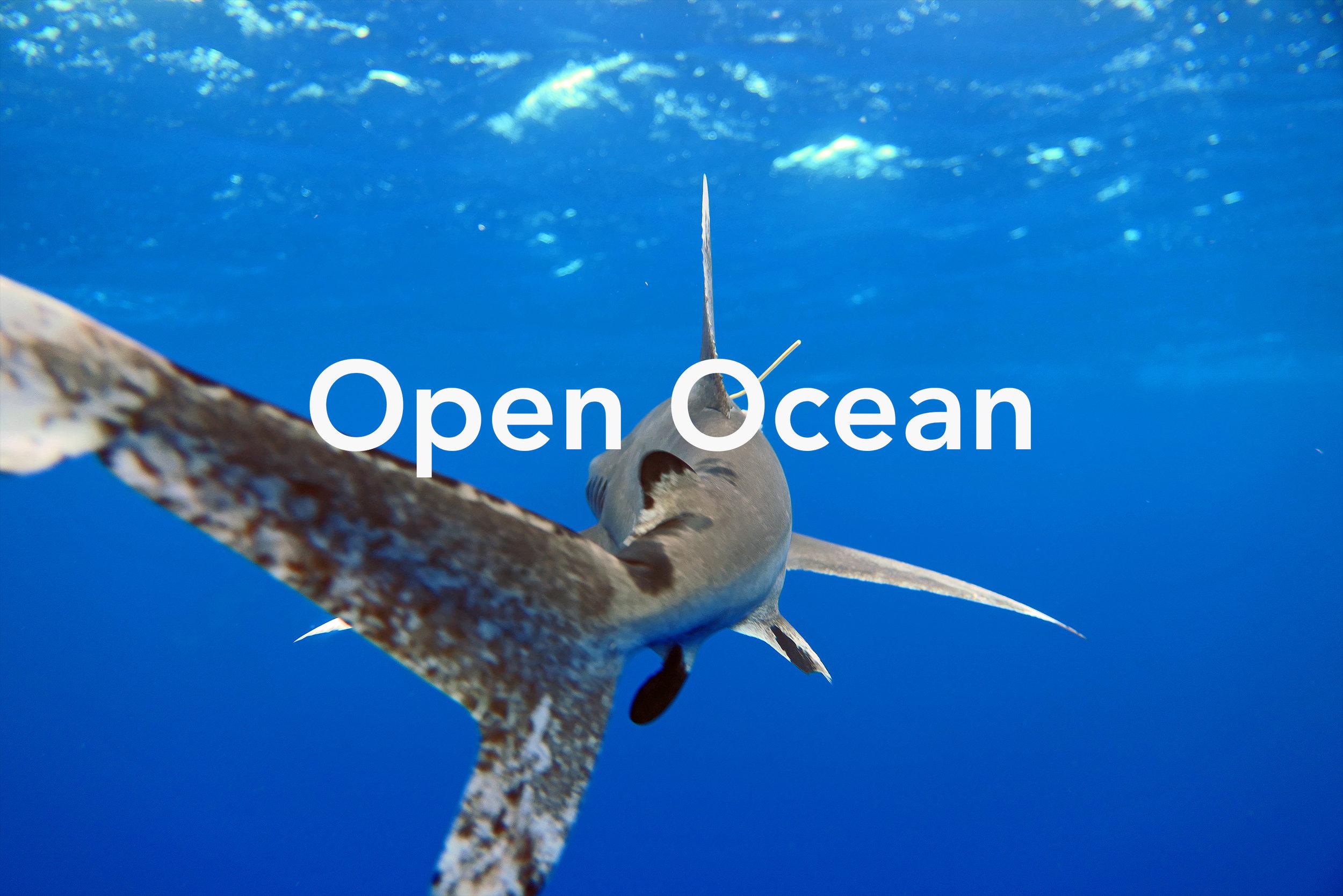 Open Ocean May 2019.jpg