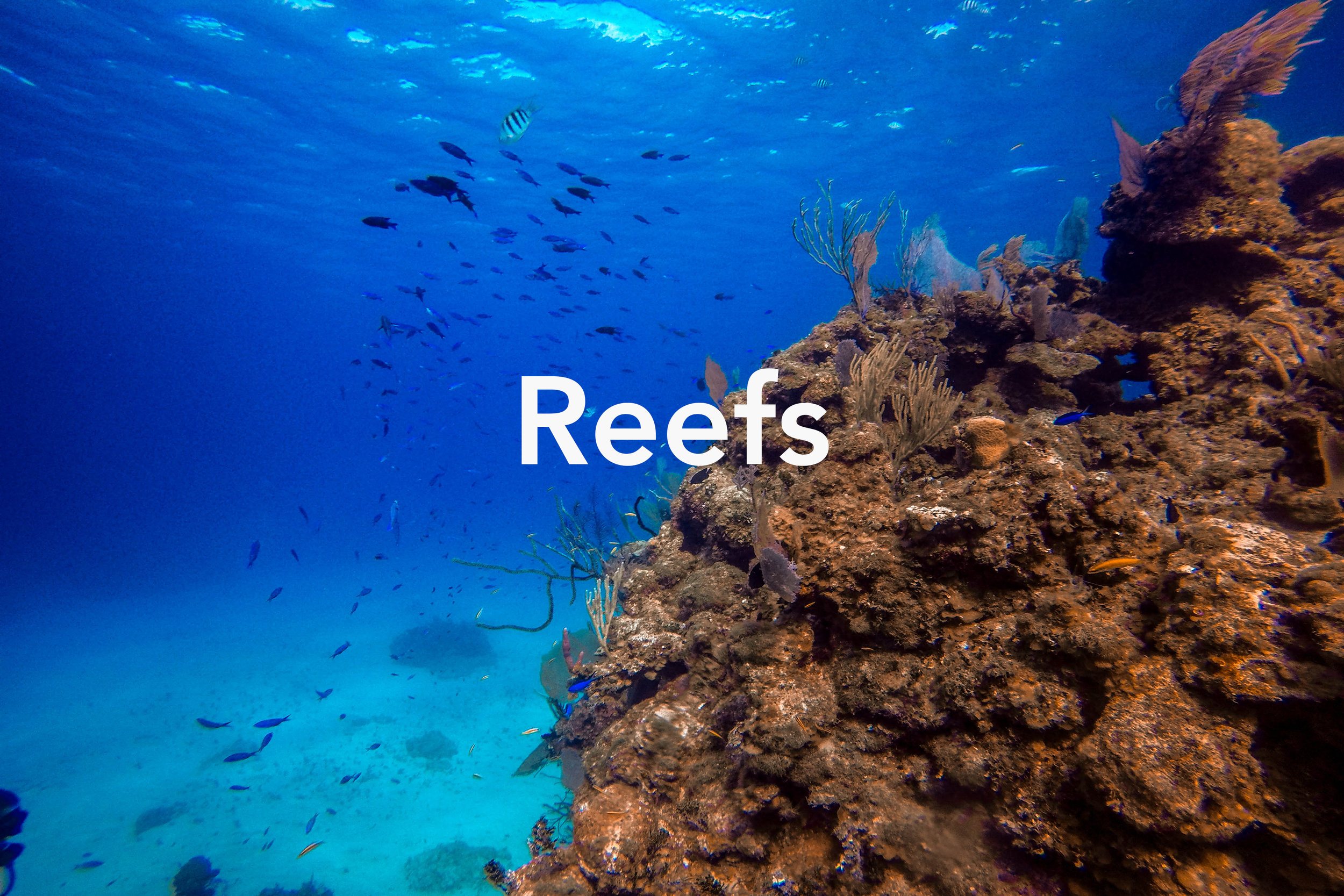 Reefs Cover May 19.jpg