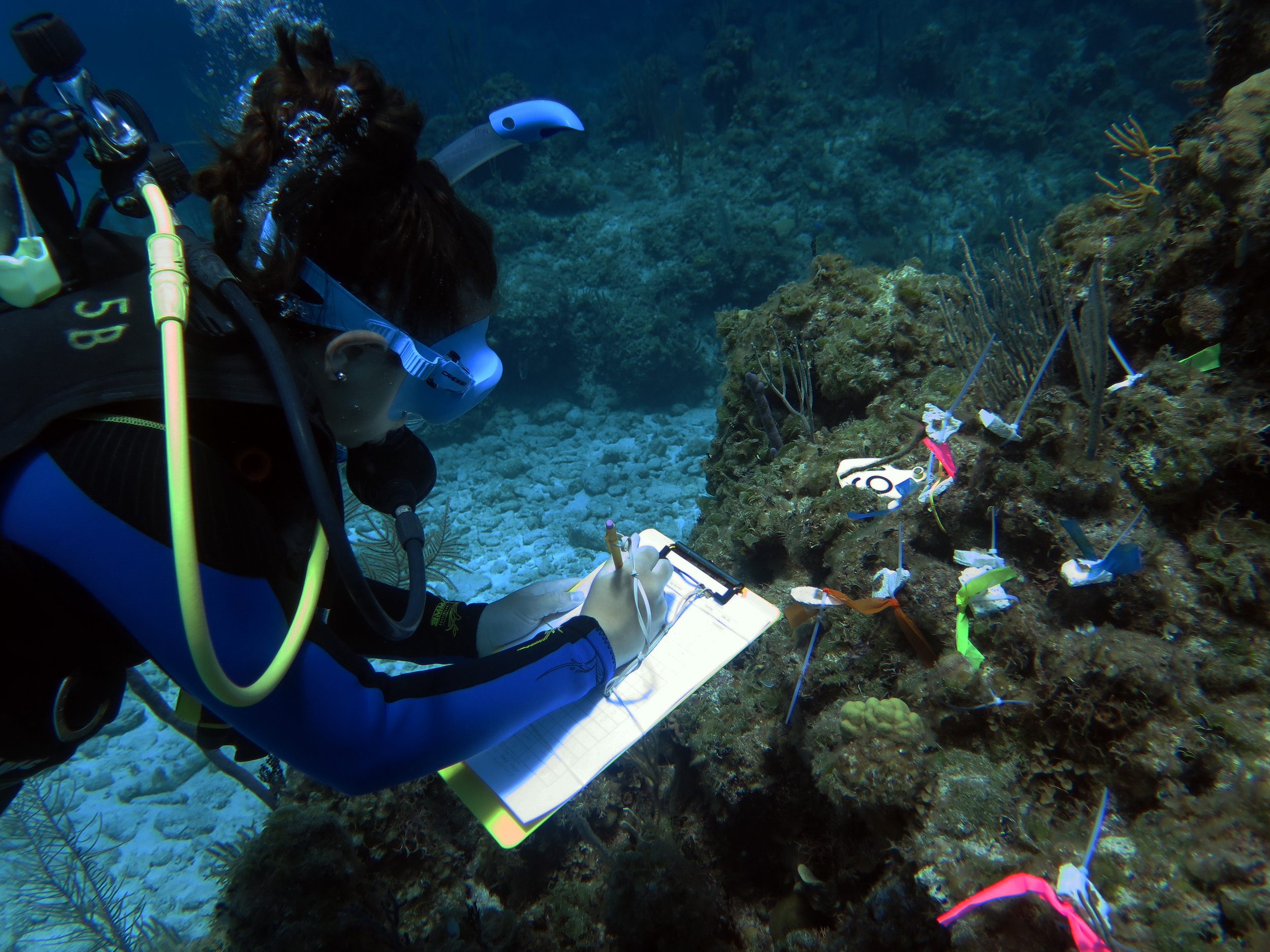 Haya collecting data of the coral microfragments growing on the reef.jpg