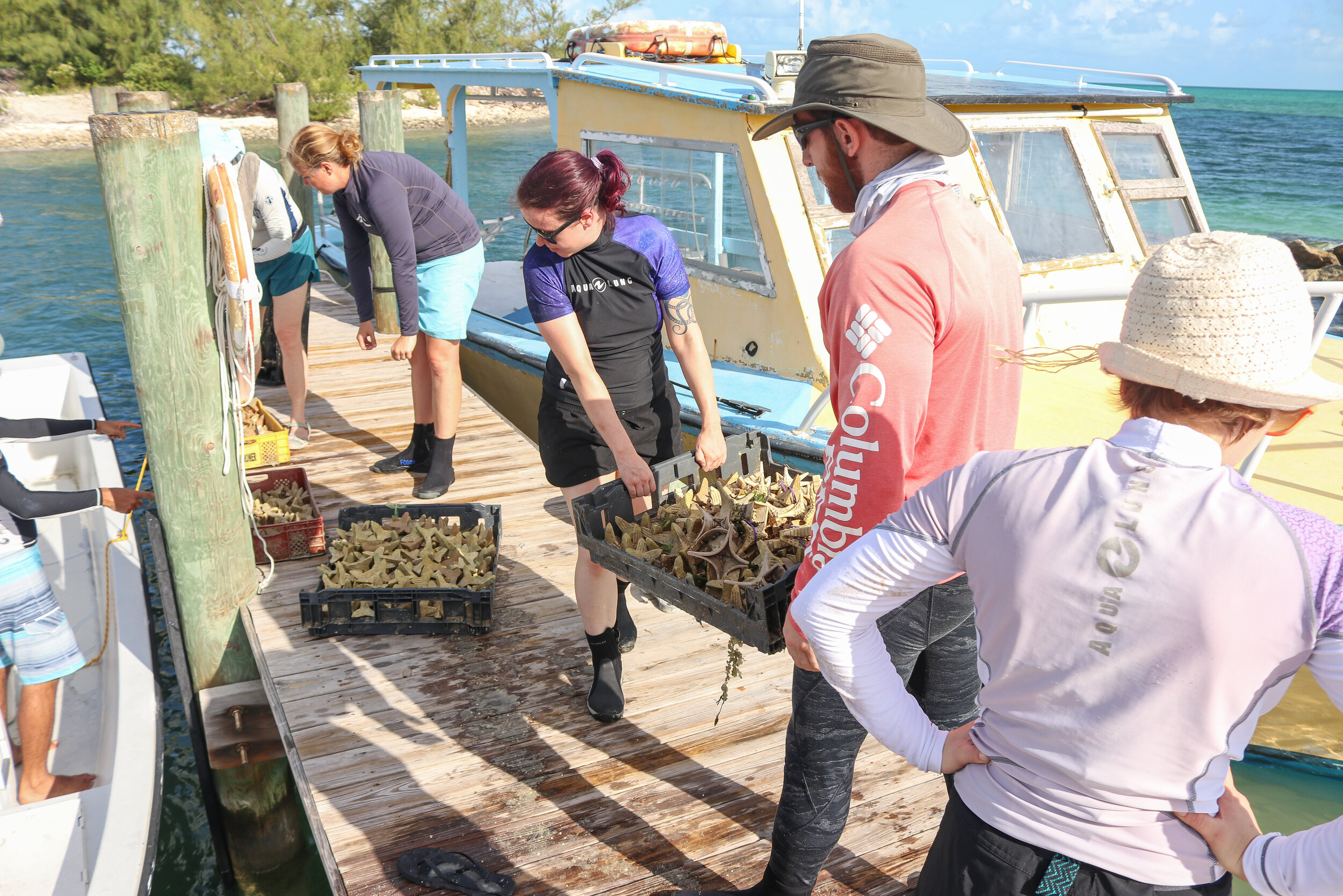 Participating aquarists carry large trays of seeding units to CEI's boat.