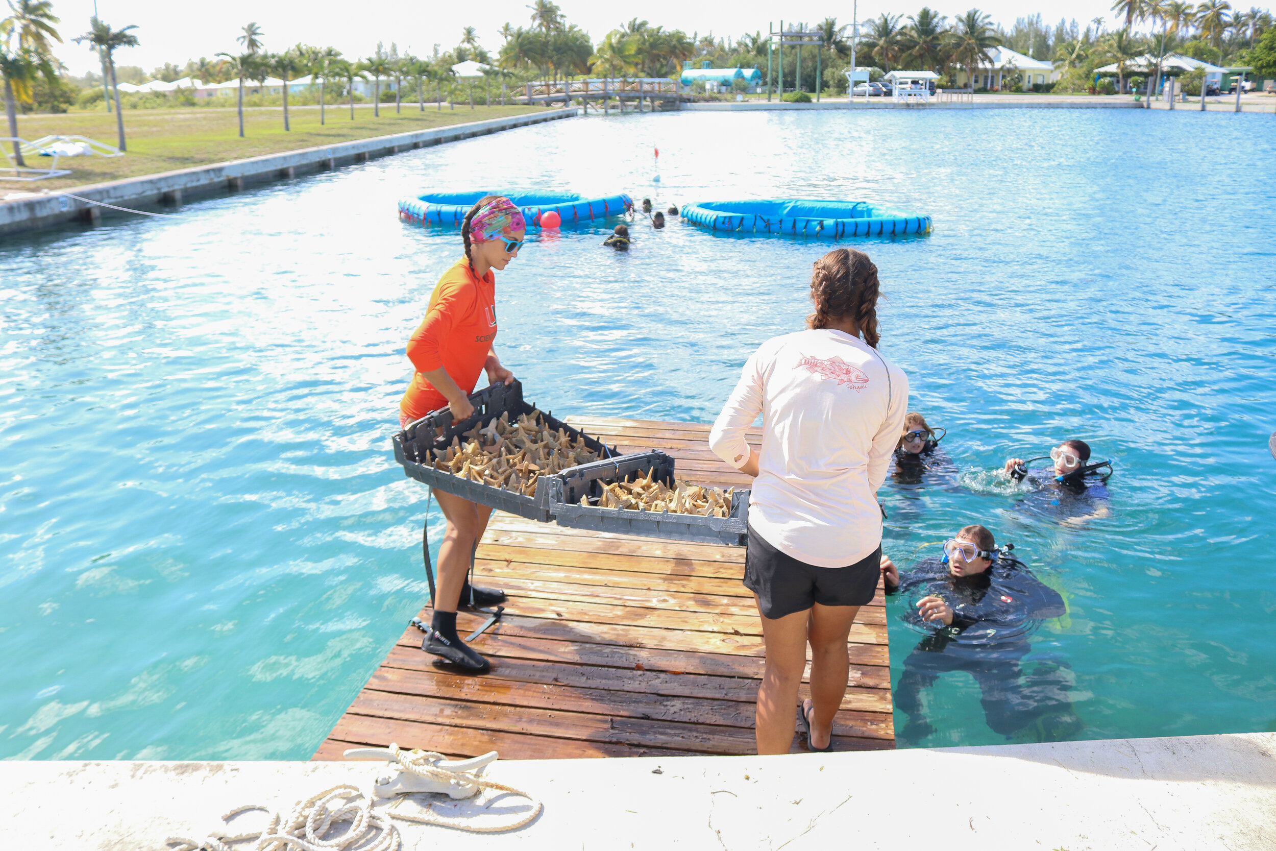 The coral team, consisting of workshop hosts, participants, and CEI interns, working together to deploy seeding units into Secore's pools.