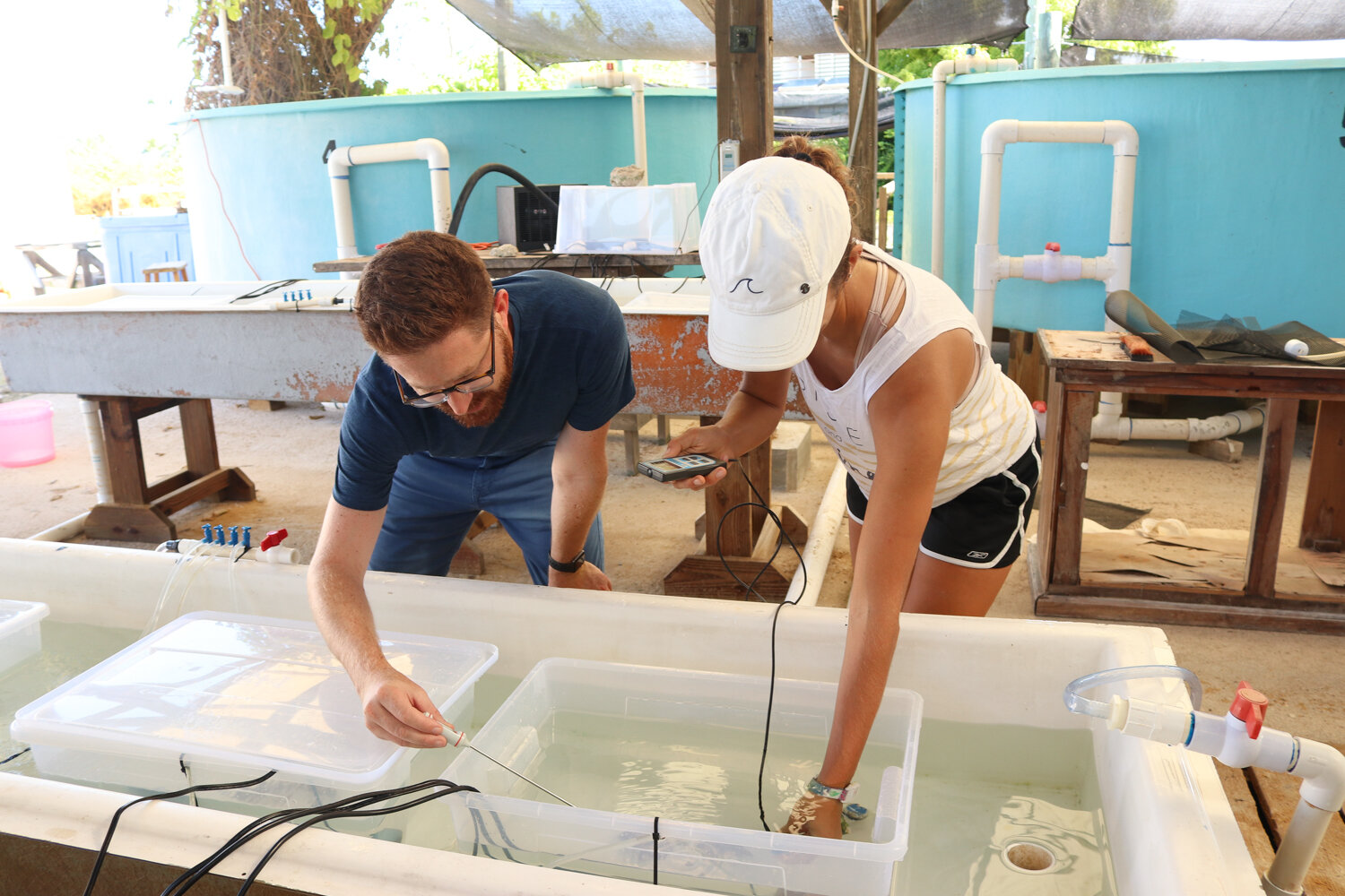 Dr. Ross Cunning (Shedd Aquarium) and Ph.D. student Liv Williamson (University of Miami) monitor temperature and light levels in one of the 8 experimental aquaria. Newly settled coral recruits will be added to each aquarium, where they will be exposed to different temperatures and symbiont availability treatments for several weeks.