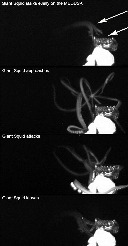 Giant+Squid+COMPOSITE.jpg