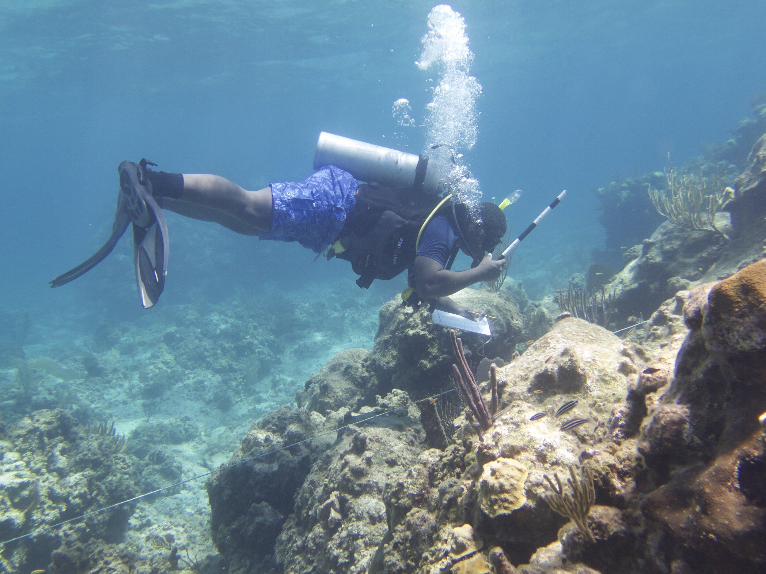 Donald doing AGRRA coral monitoring at Bamboo.